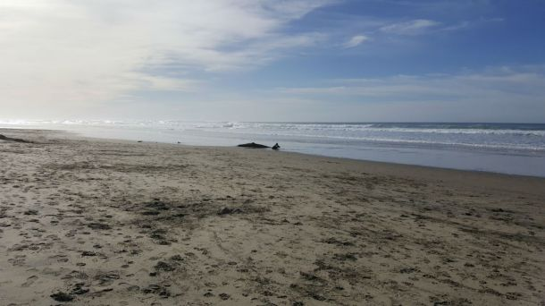 Beautiful Heceta Beach Is Just Steps Away From Suite